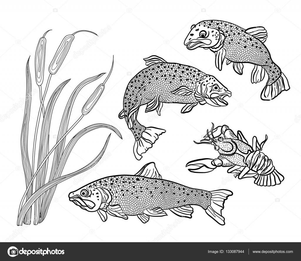 Kleurplaten Watervogels.Kleurplaten Voor Volwassenen Reeks Vis Forel Kanker En Riet