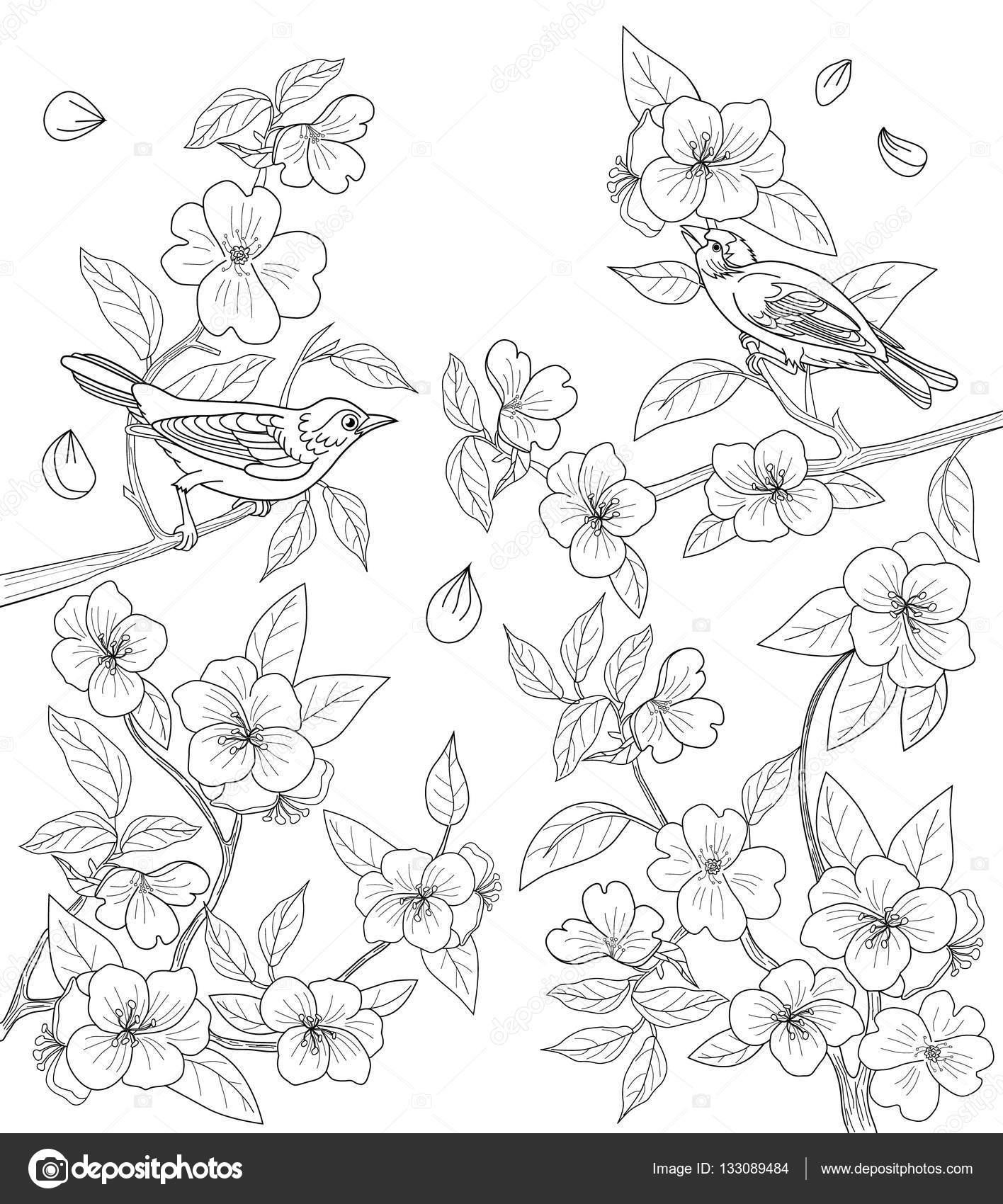 Página para colorear para adultos con pájaros y flores — Vector de ...