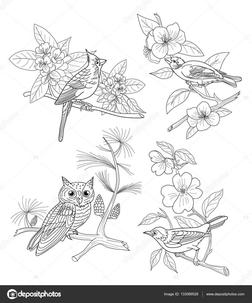 Kümesi çiçekli Dallar Dört Kuş Boyama Kitabı Stok Vektör
