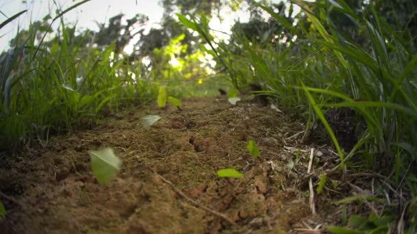 list fréza mravenci