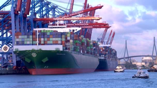 Containerschiffe entladen oder beladen ihre Ladung im Hamburger Hafen am burchartkai und eurokai, Deutschland.