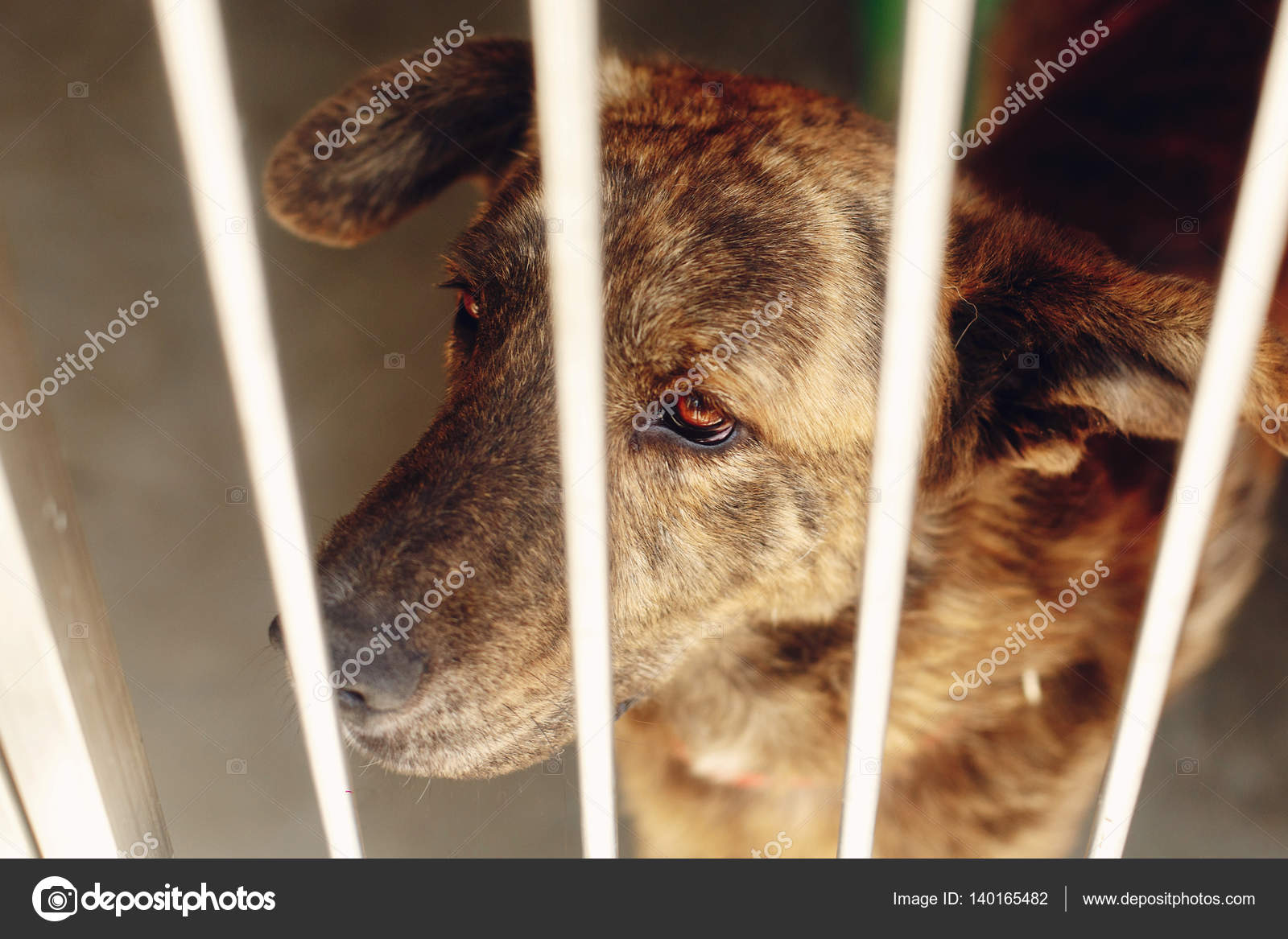 Scared dog in shelter cage — Stock Photo © Sonyachny #140165482