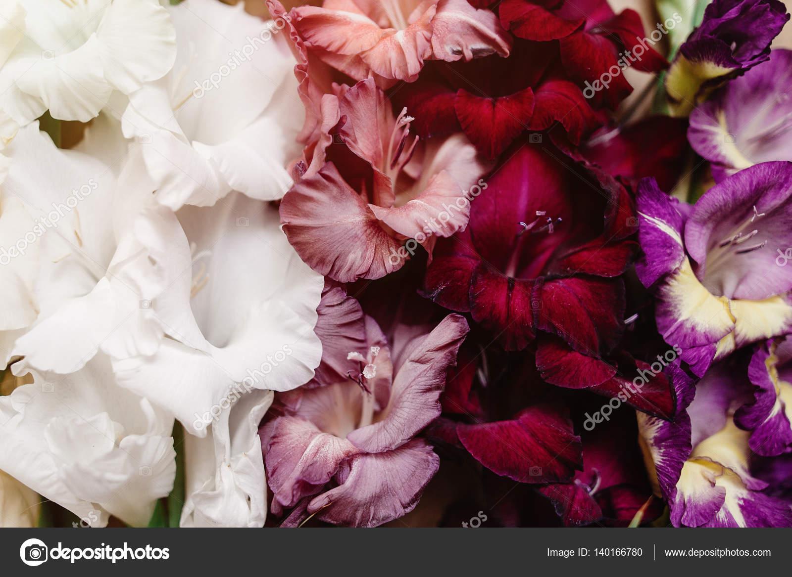 Fondo: Pantalla De Flores Preciosas