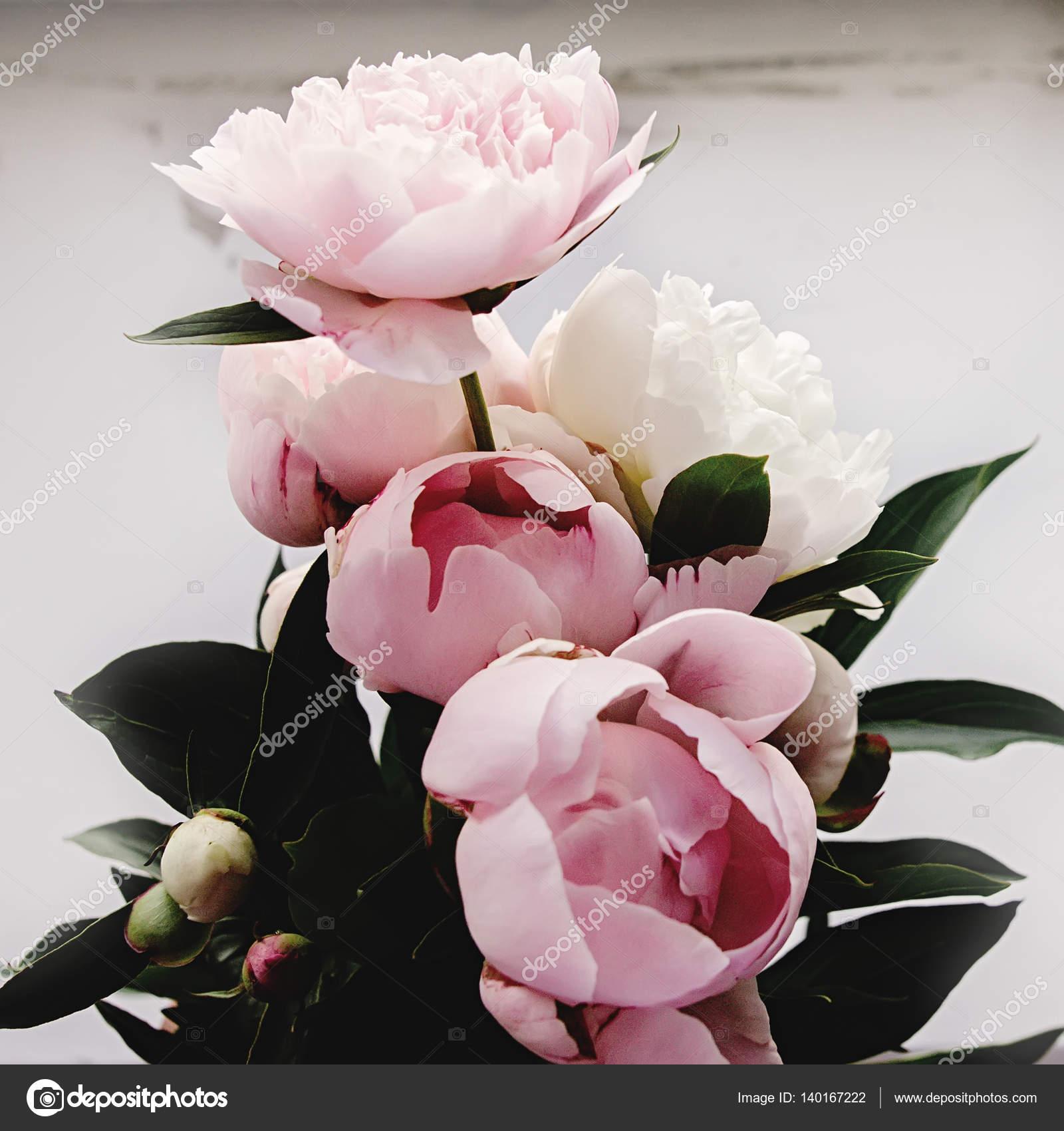 Schone Pfingstrosen Rosa Blumen Stockfoto C Sonyachny 140167222