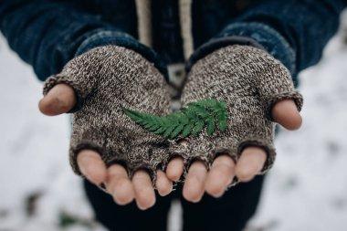 traveler holding green leaf fern