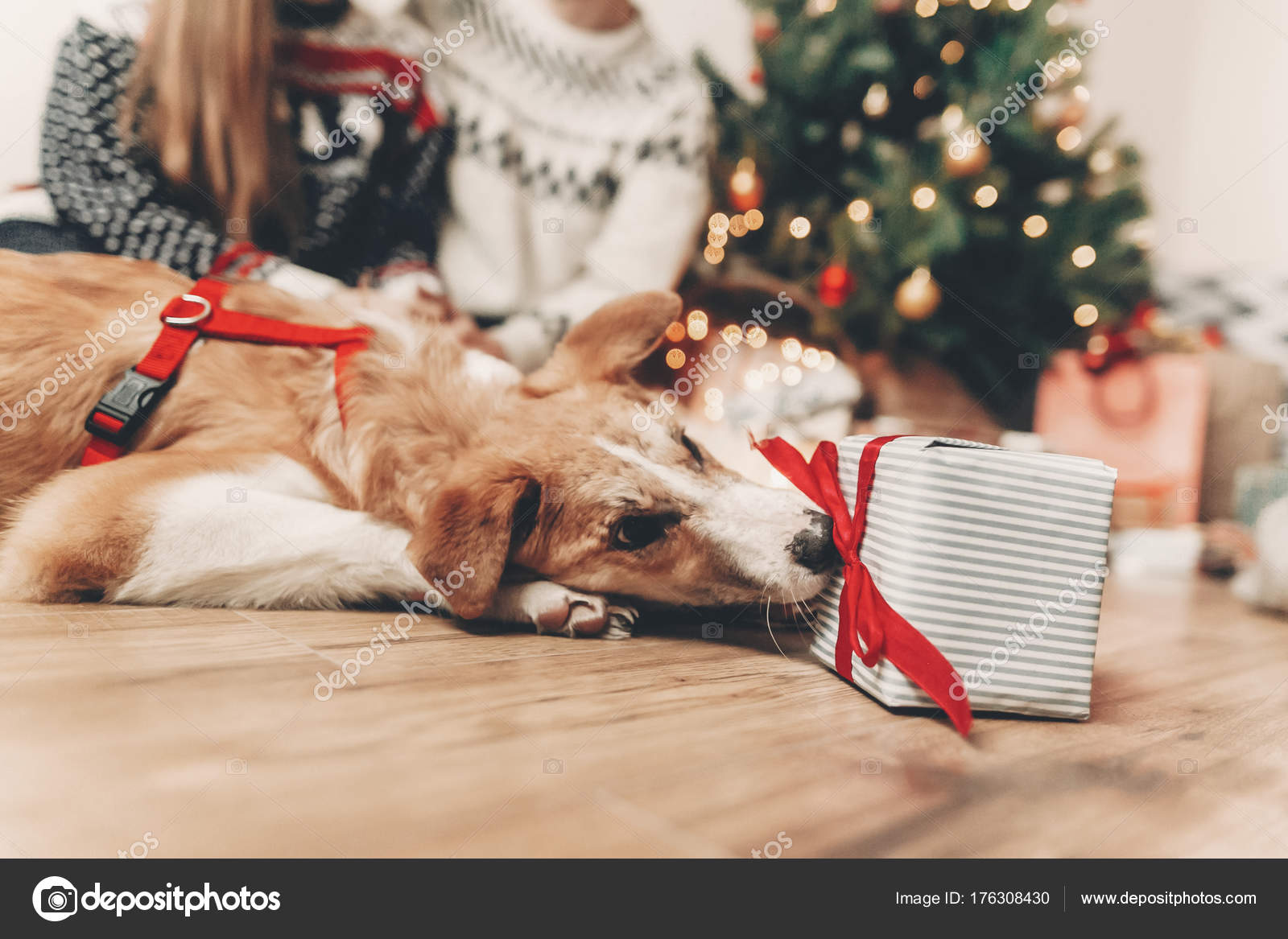 Cute Funny Dog And Stylish Gift On Background Of Happy Family In Festive Sweaters At Christmas Tree Lights Photo By Sonyachny