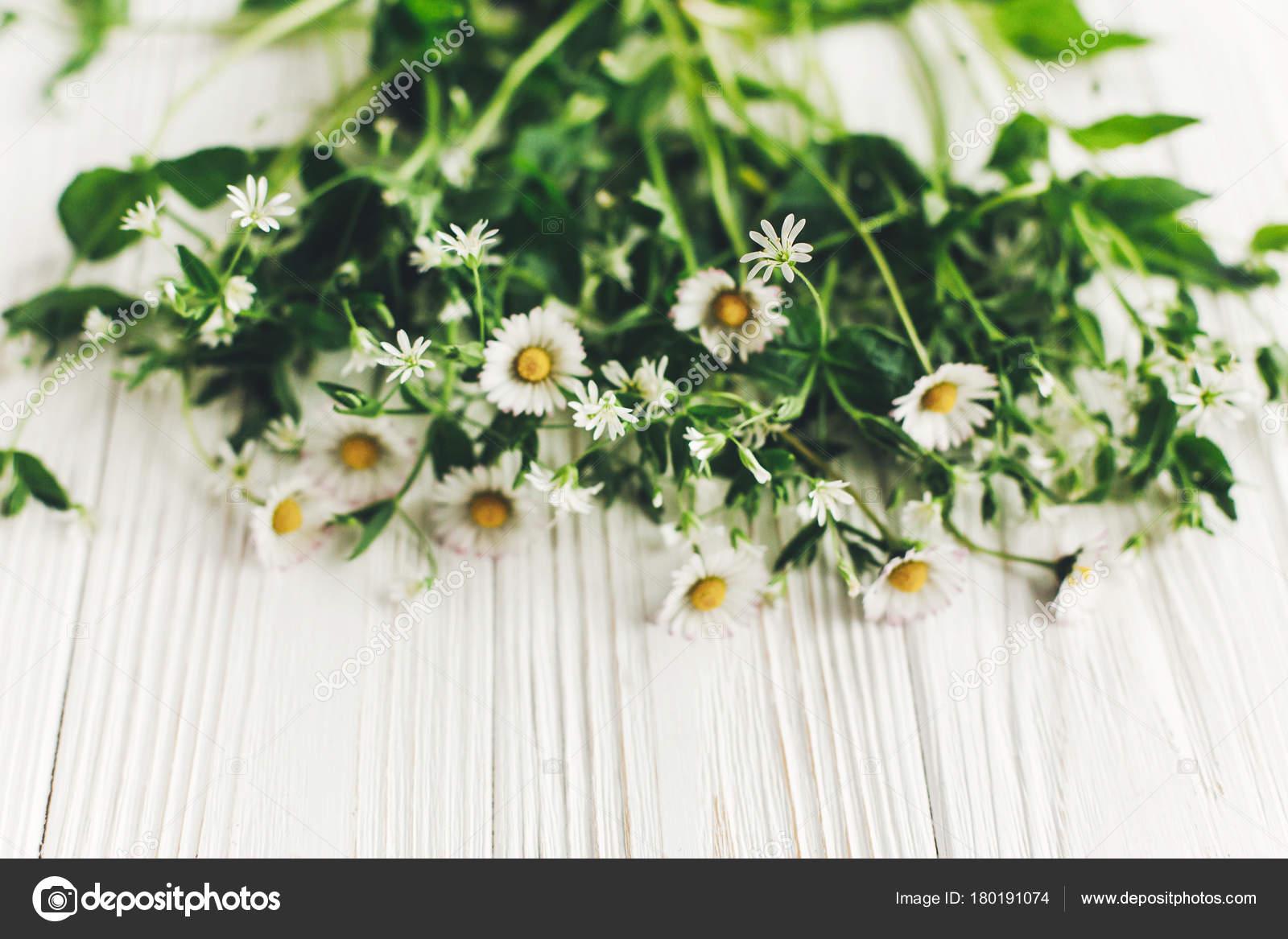 Beautiful daisy flowers greenery white wooden background top view beautiful daisy flowers greenery white wooden background top view copy stock photo izmirmasajfo Choice Image
