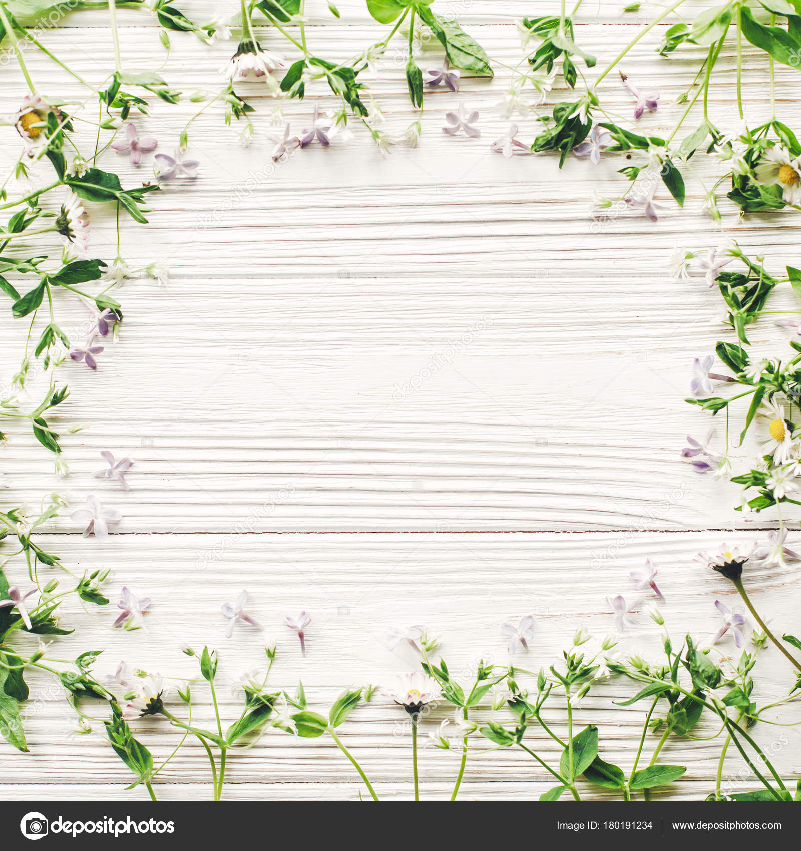 Beautiful Daisies Lilac Flowers Frame Rustic White Wooden Background ...