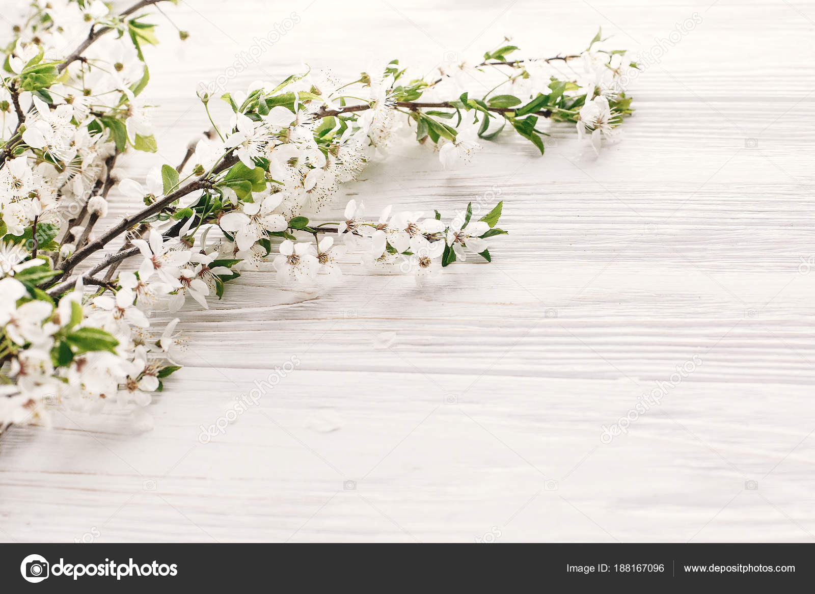 Beautiful Fresh Cherry Branches White Flowers Rustic Wooden