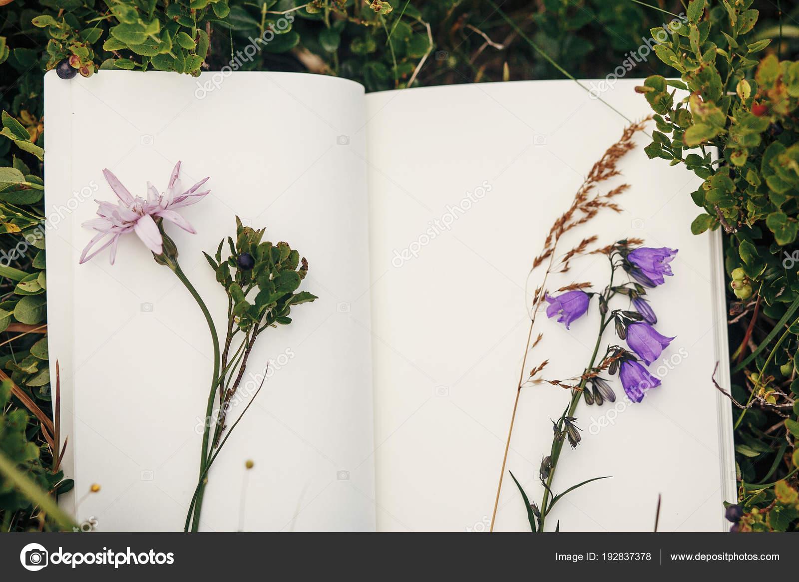 belle campanule fleurs sauvages sur cahier sur les buissons