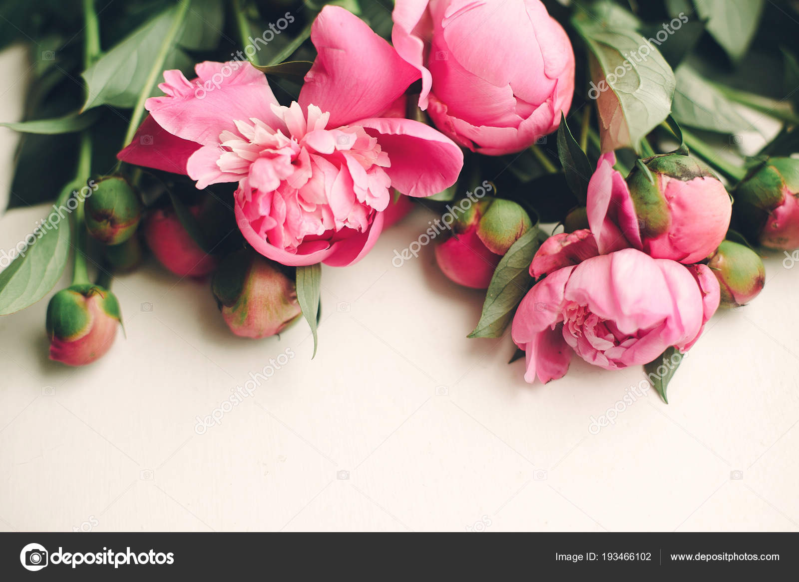 Lovely pink peonies rustic white wooden background top view space lovely pink peonies on rustic white wooden background top view space for text floral greeting card flat lay beautiful flowers pattern tender image mightylinksfo