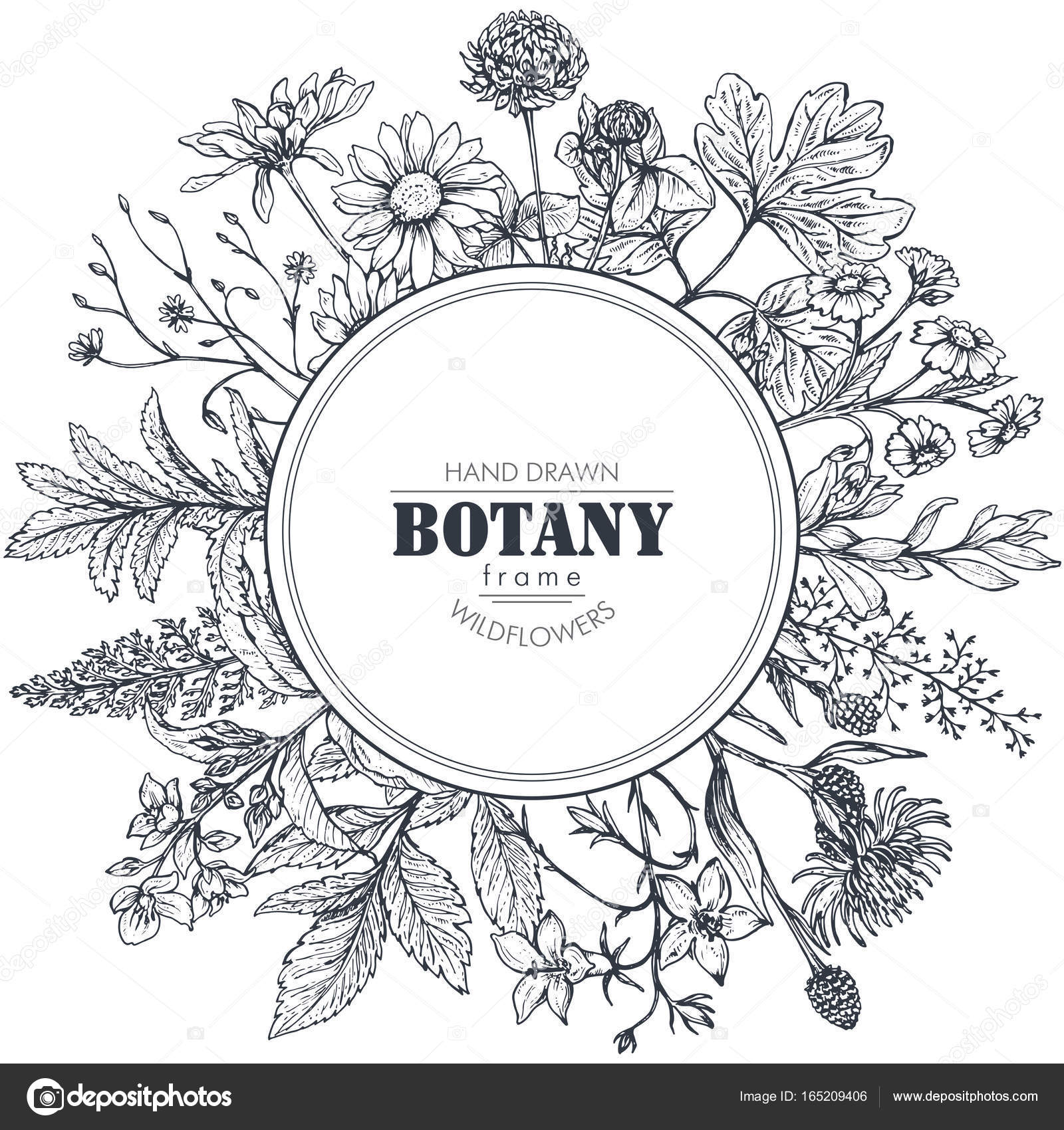 Vector circle frame with herb and wildflower elements — Stock Vector ...