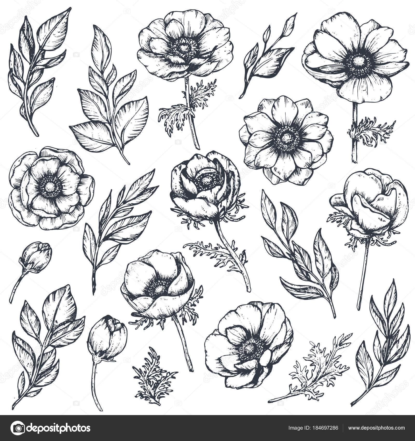 Flores Hermosas Para Dibujar Colección De Vector De Mano