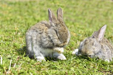 Little rabbits sitting outdoors in spring