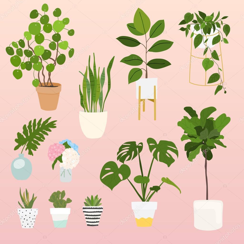Set of plants in pots