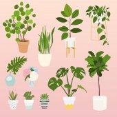 Cserepes növények csoportja
