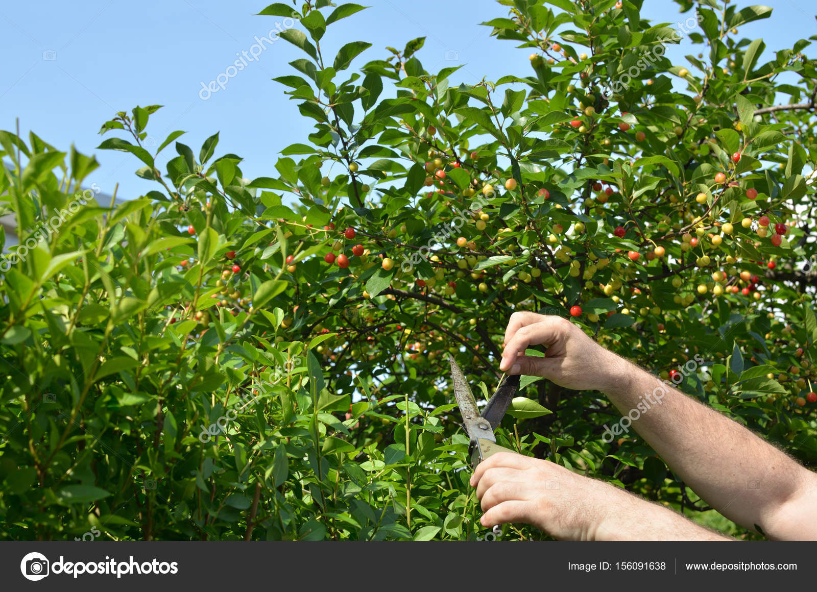 Taglio siepe in una giornata di sole — Foto Stock © Bane.m #156091638