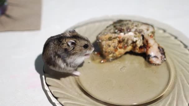 Maus sitzt in der Schüssel und isst Fisch