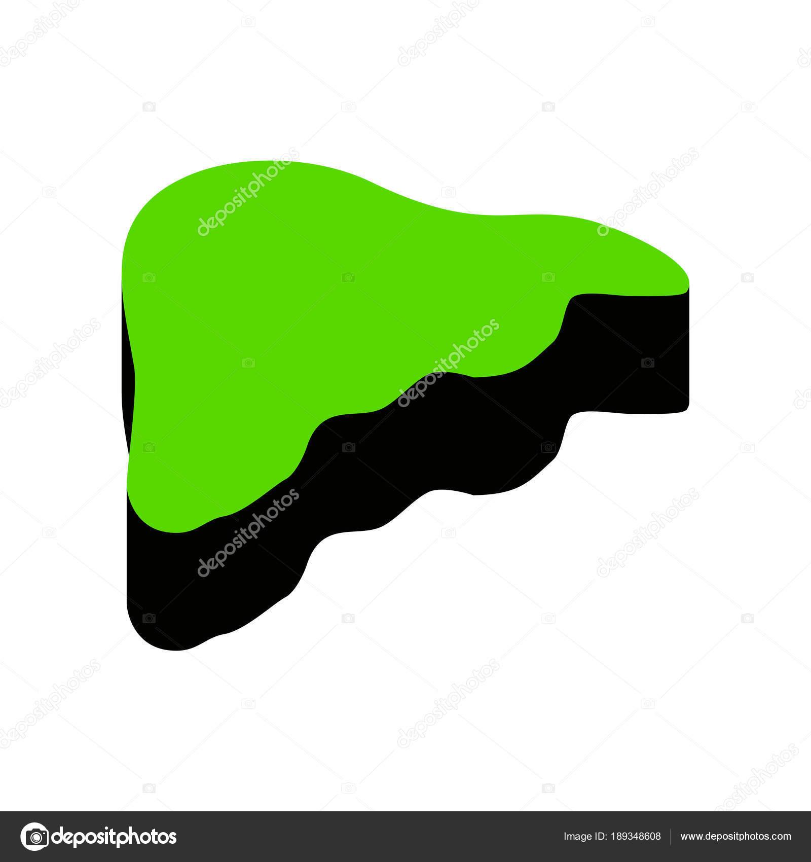 Anatomía humana. Muestra de hígado. Vector. Verde icono 3d con cara ...