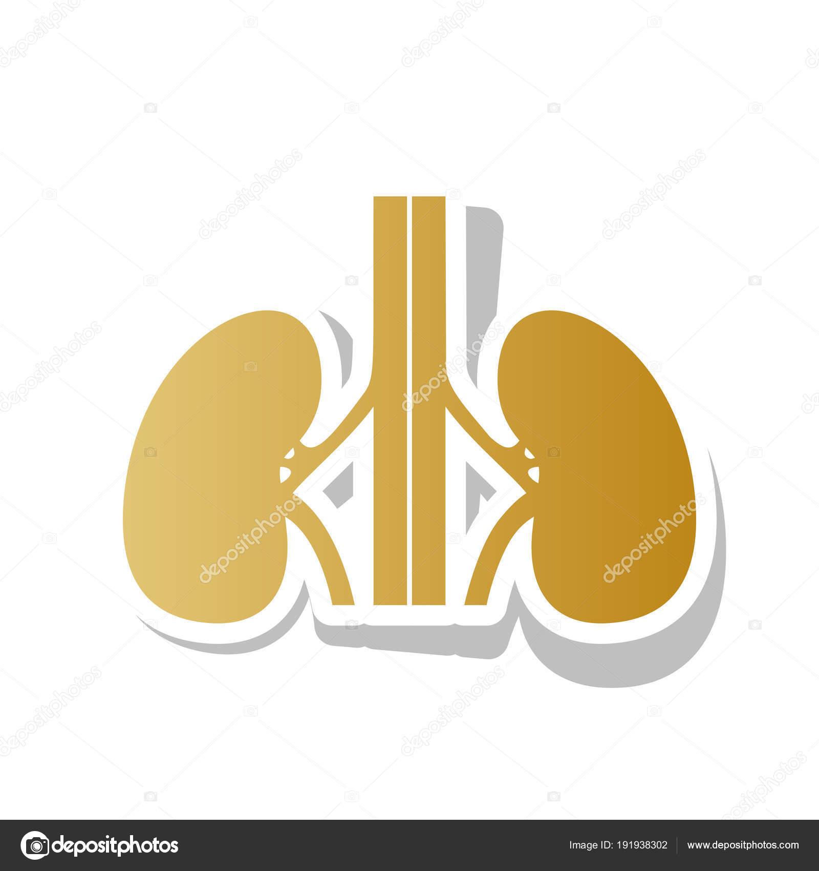 Anatomía humana. Signo de los riñones. Vector. Oro icono degradado ...