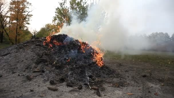a bonfire in a clearing in the forest