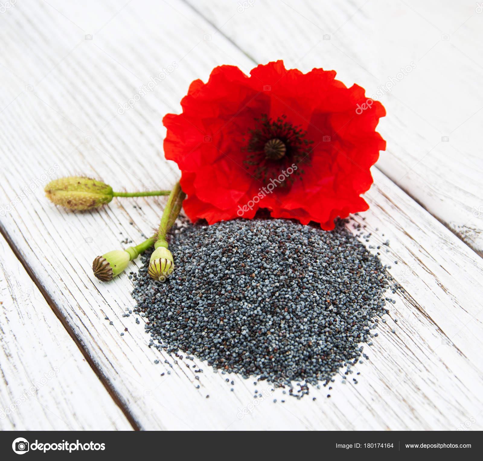 Poppy Seeds And Flowers Stock Photo Almaje 180174164