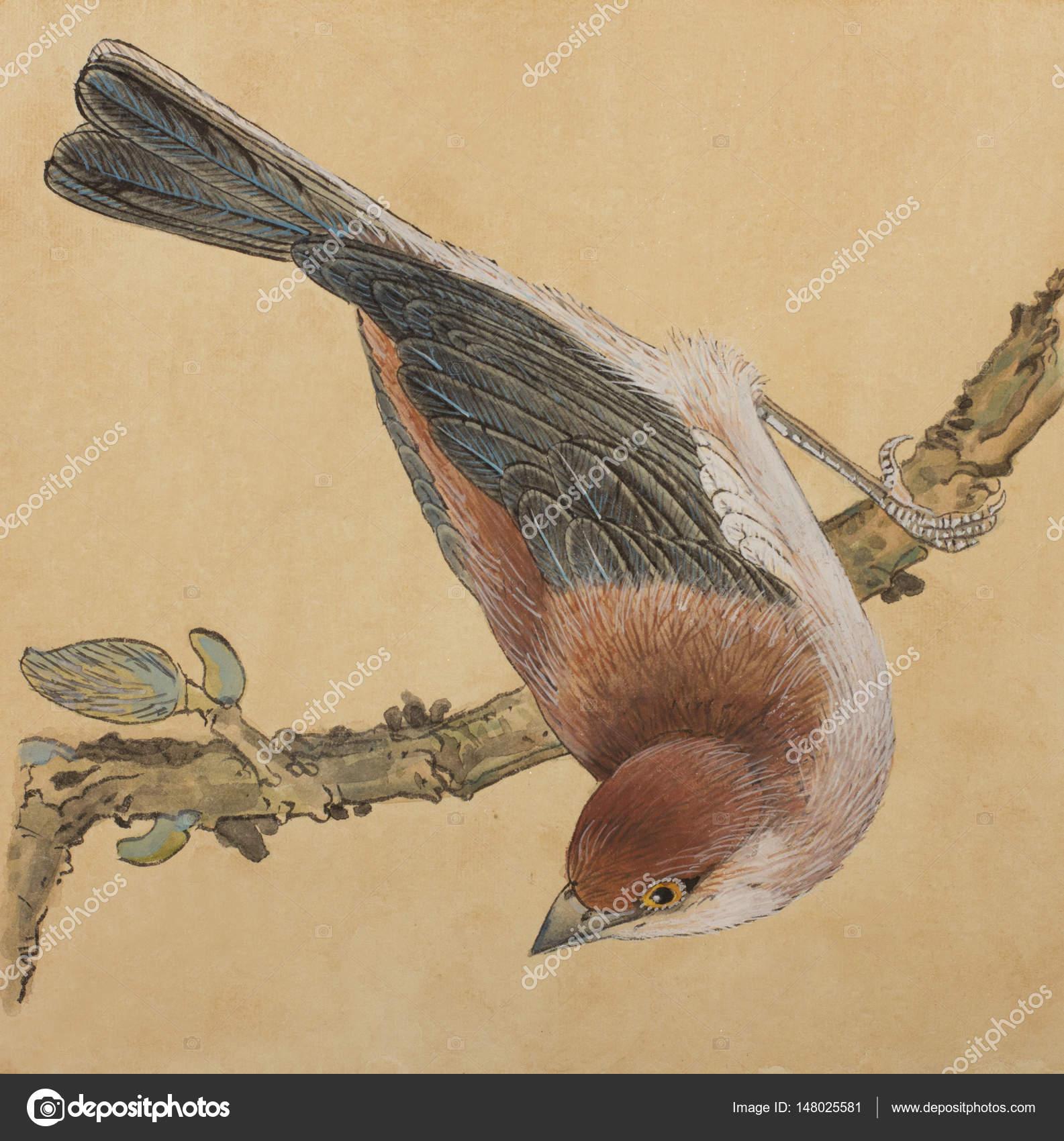 Petit Oiseau Sur Une Branche Photographie Nikolai2 C 148025581