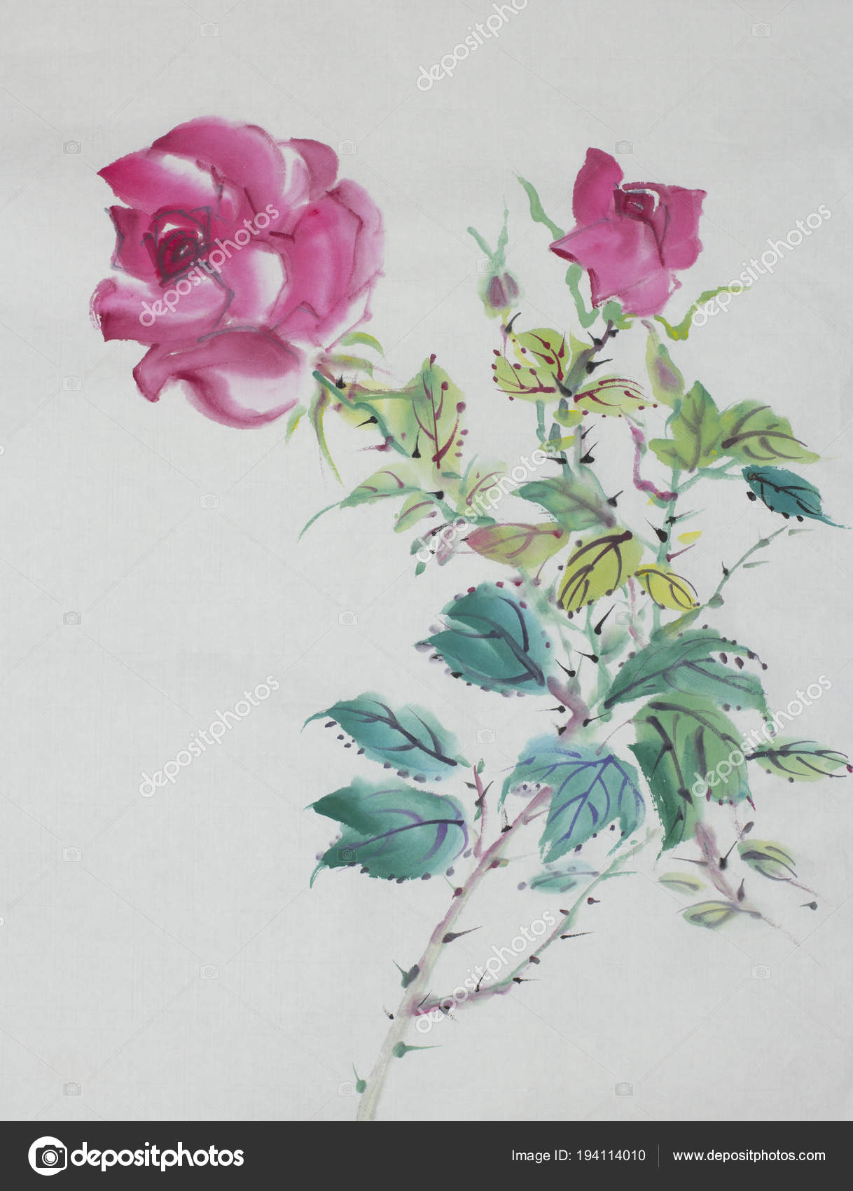 drawing of rose bush stock photo nikolai2 194114010