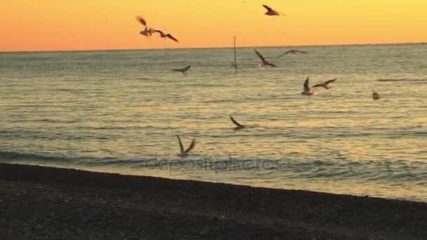 Rackové nad hladinou moře při západu slunce