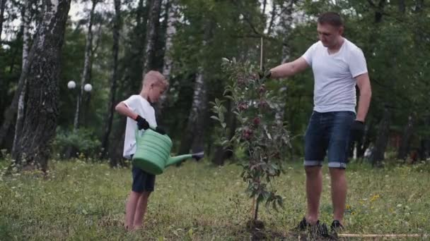 Muž a syn zasadili švestku do parku.