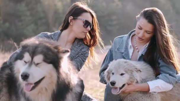 Schöne brünette Frauen sind mit ihren Hunden in der Natur