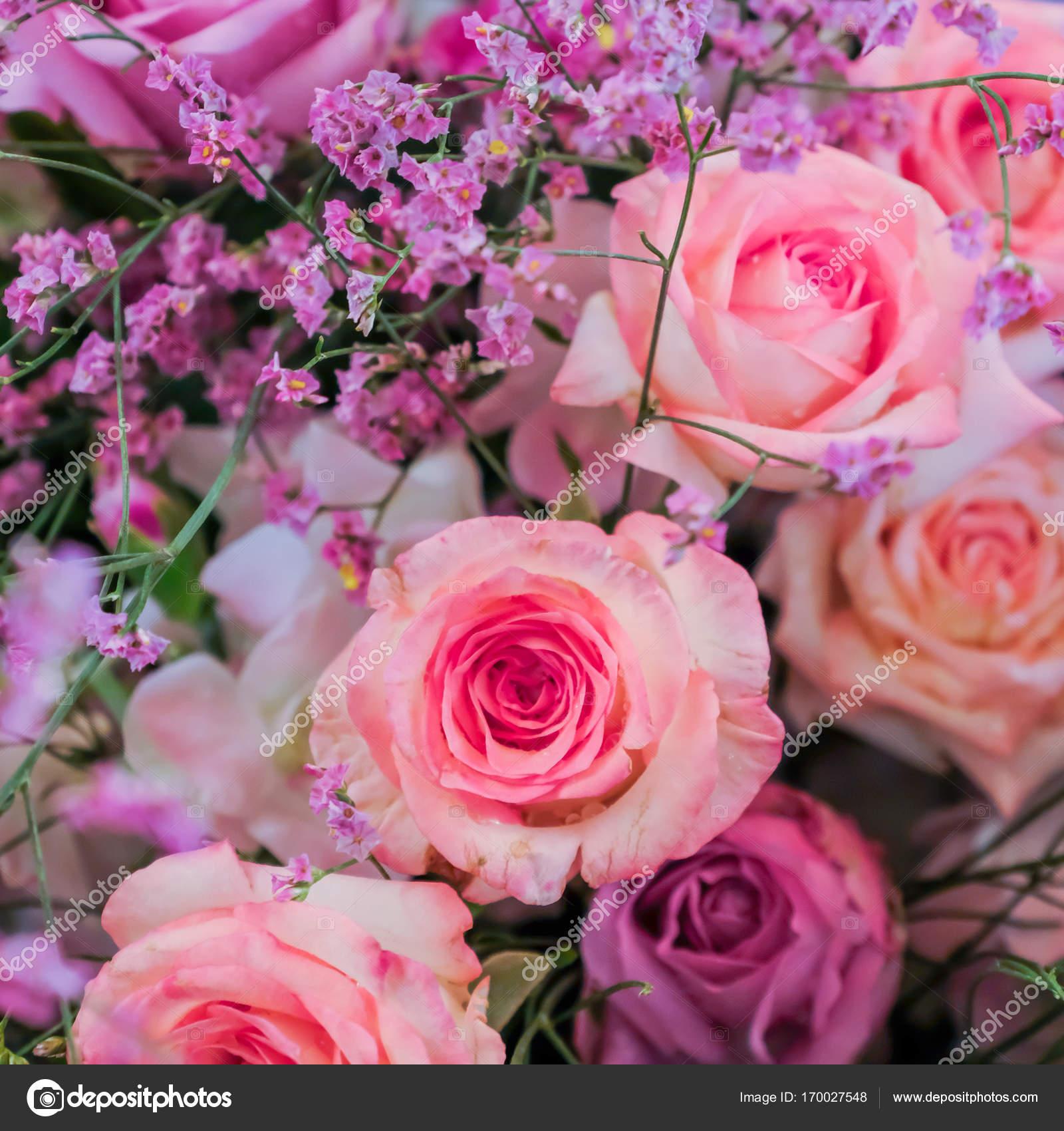 Fotos Flores Hermosas Para Descargar Fondo De Flores Hermosas