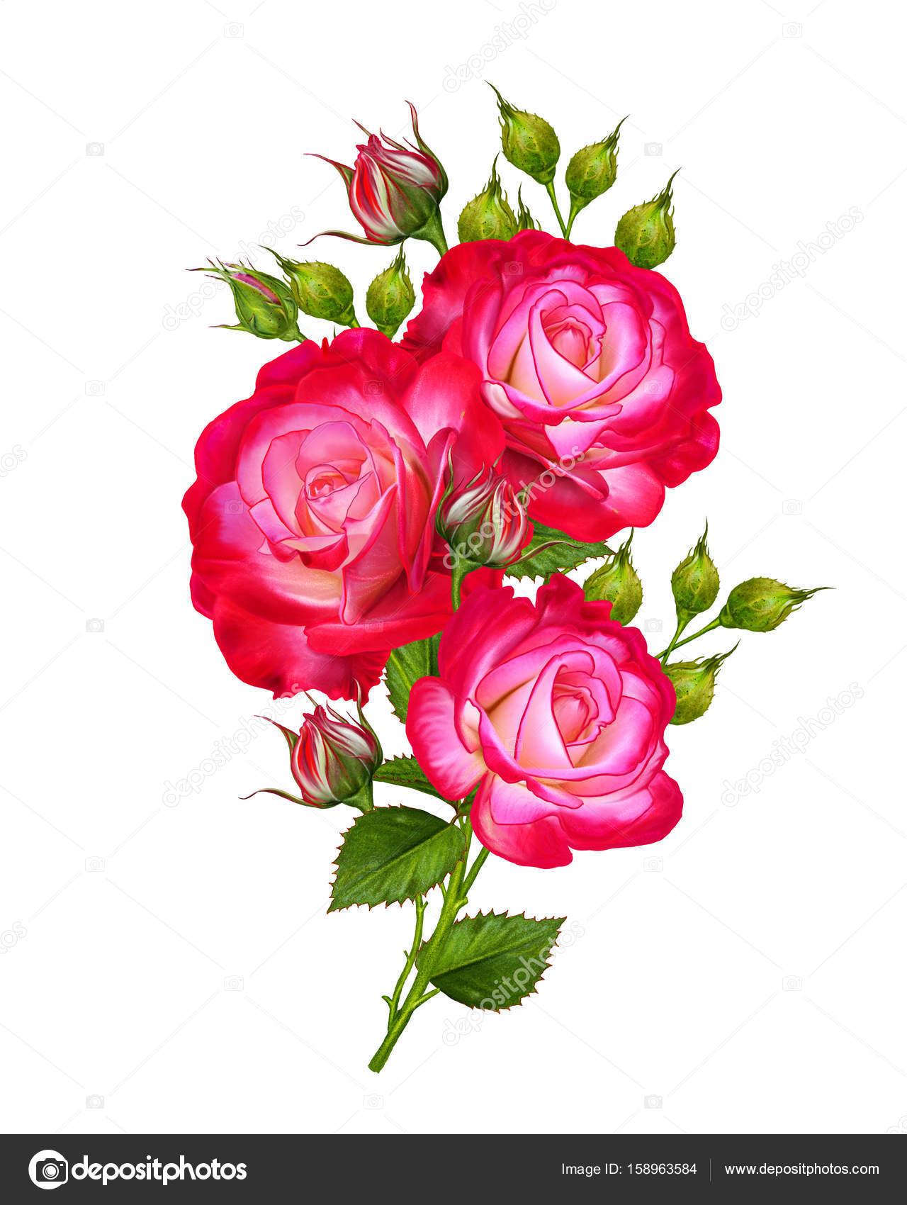Composition De Fleurs Un Bourgeon D Une Belle Rose Rouge Vif Sur