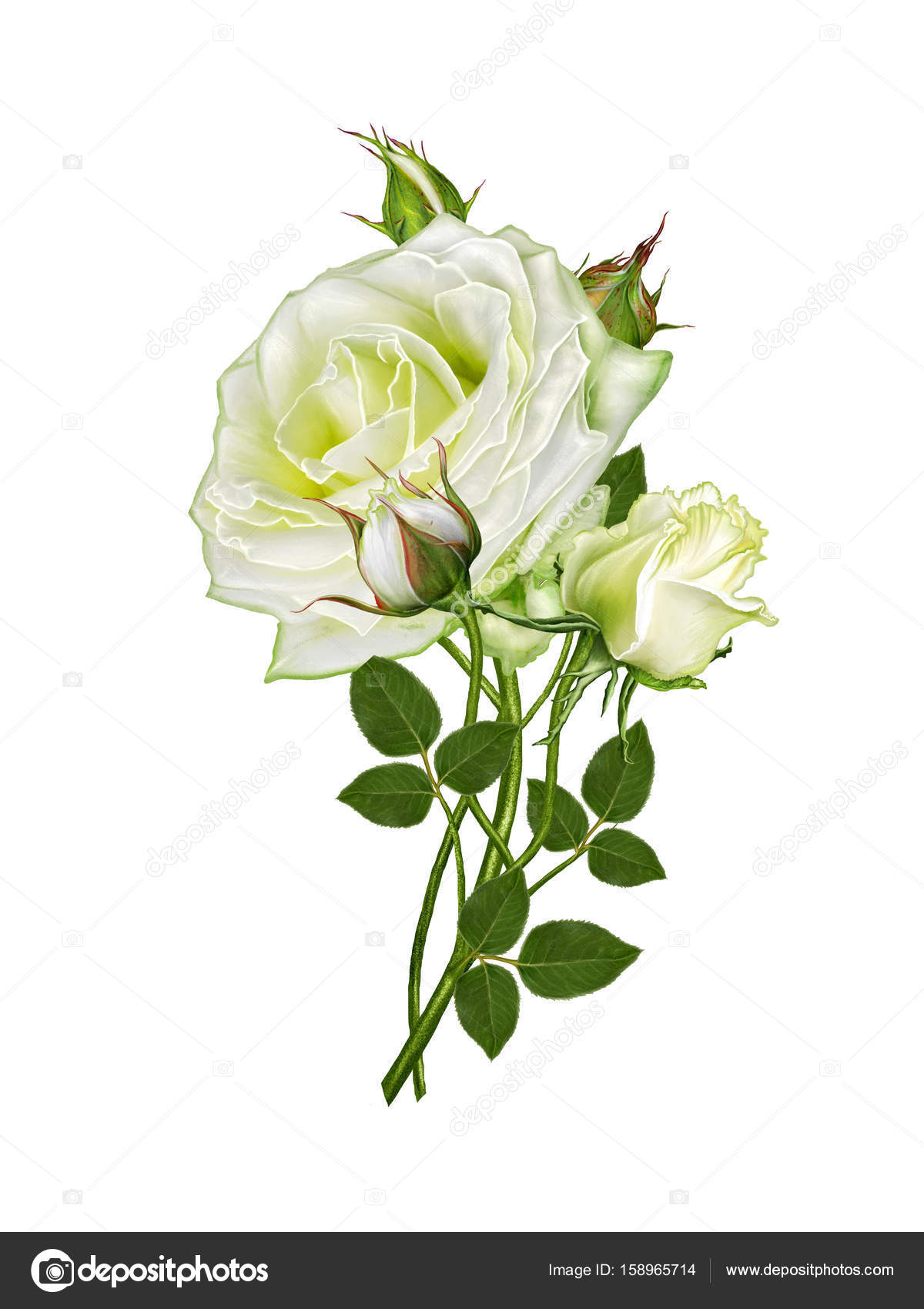 Flower Arrangement Of Delicate White Roses Stock Photo Sokolova