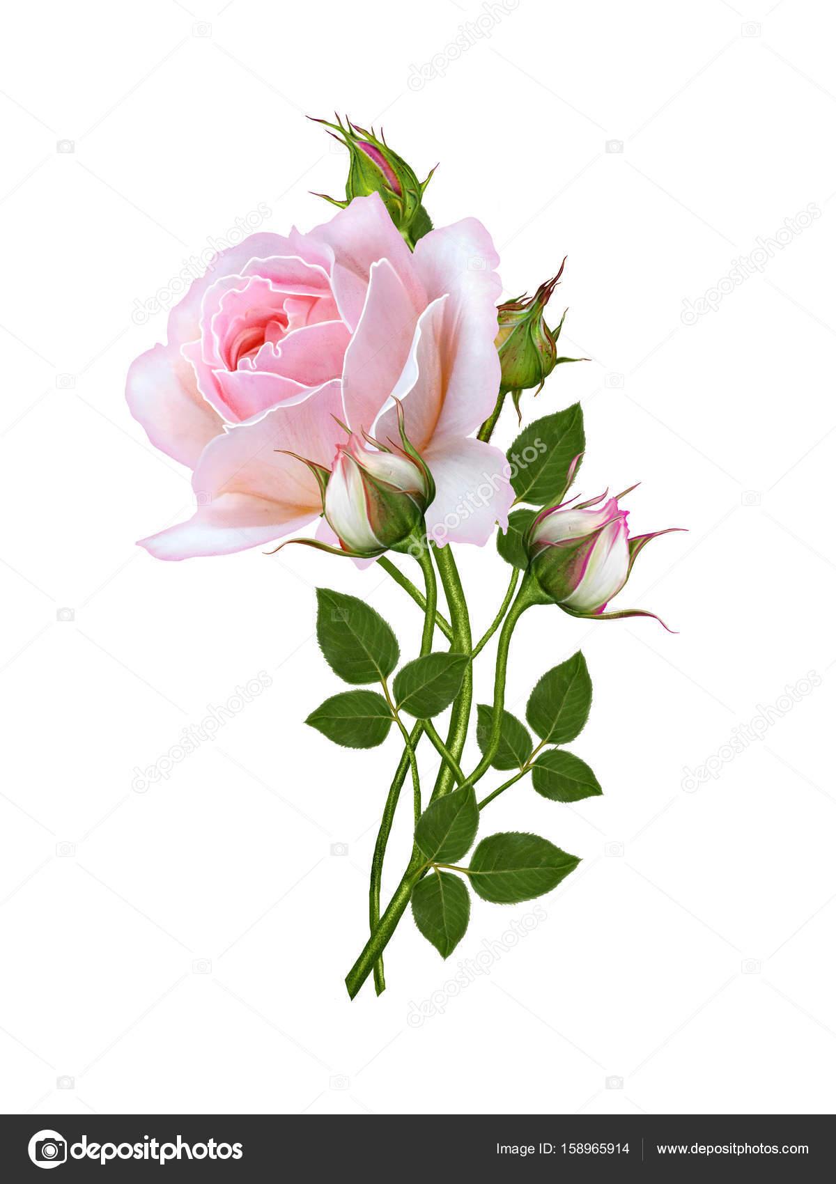 Arreglo Floral De Rosas Rosa Delicadas Hermosa Flor En Un