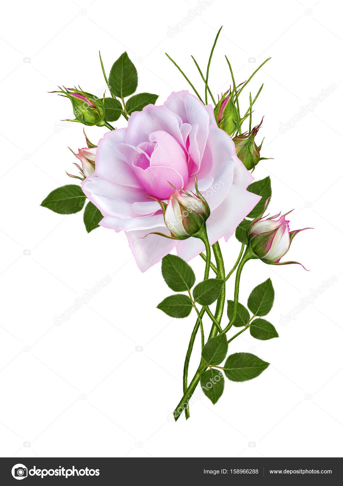 Flower arrangement of delicate pink roses beautiful flower on a flower arrangement of delicate pink roses beautiful flower on a long curved stem isolated izmirmasajfo