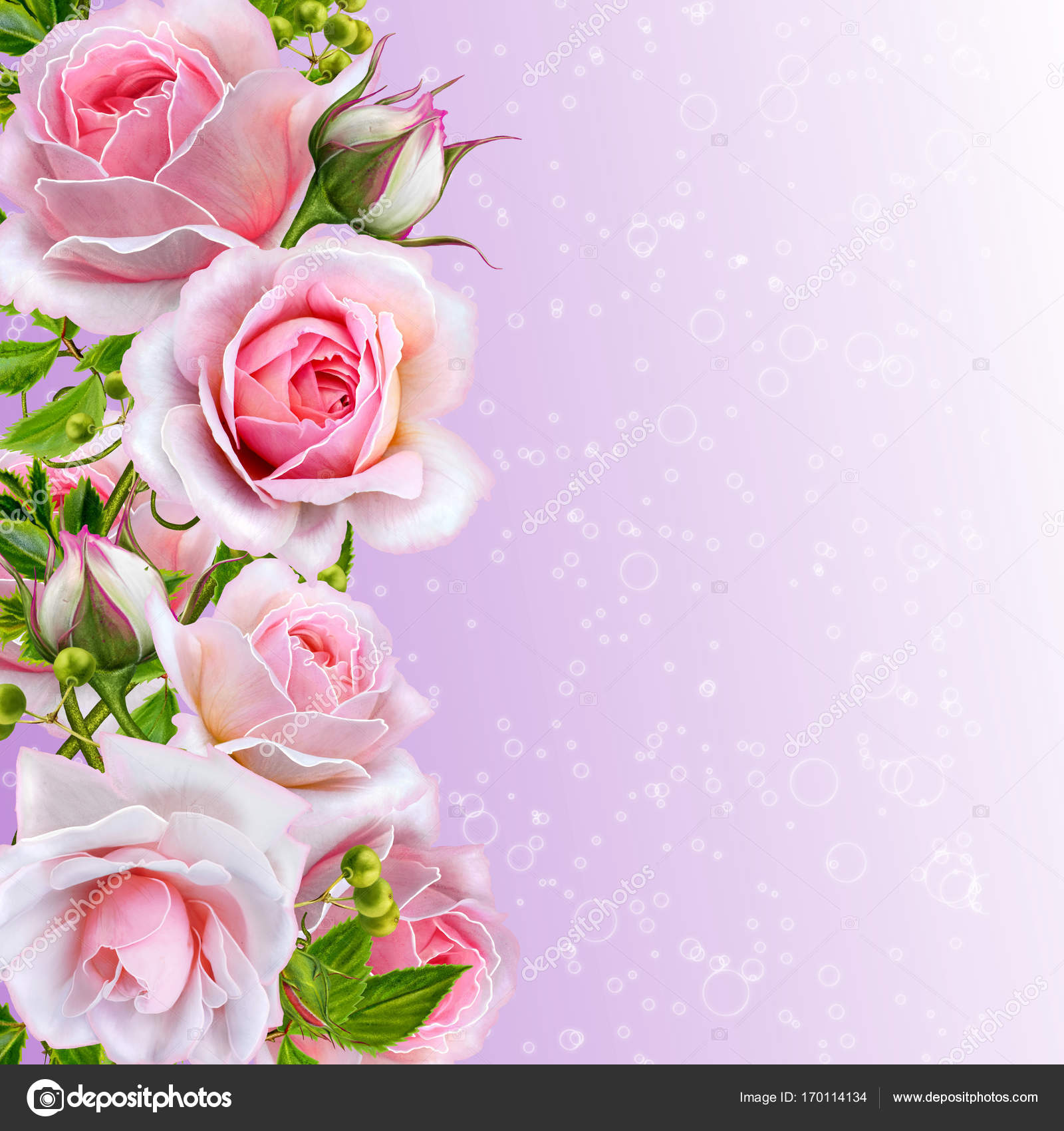Floral Background Garland Of Flowers Tender Pink Roses Berries