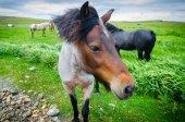 Koně na pastvině louce přichází, přistoupil k fotoaparátu.