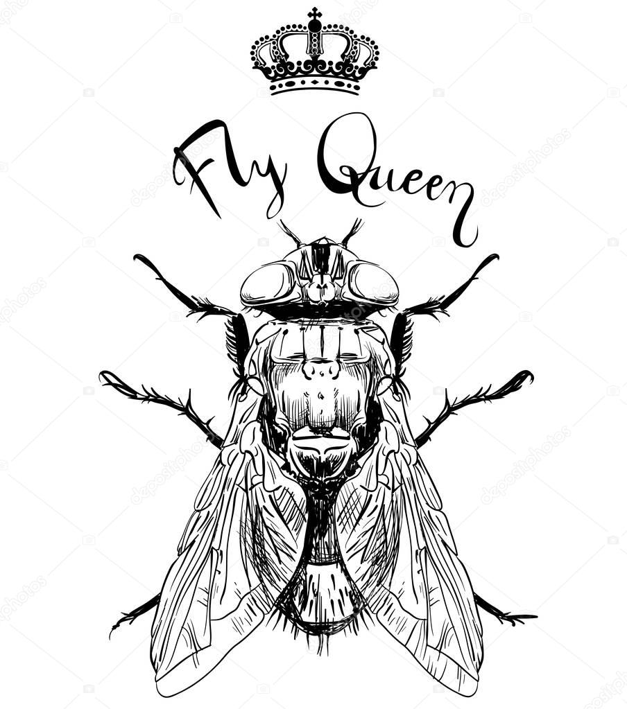 fly insect with crown