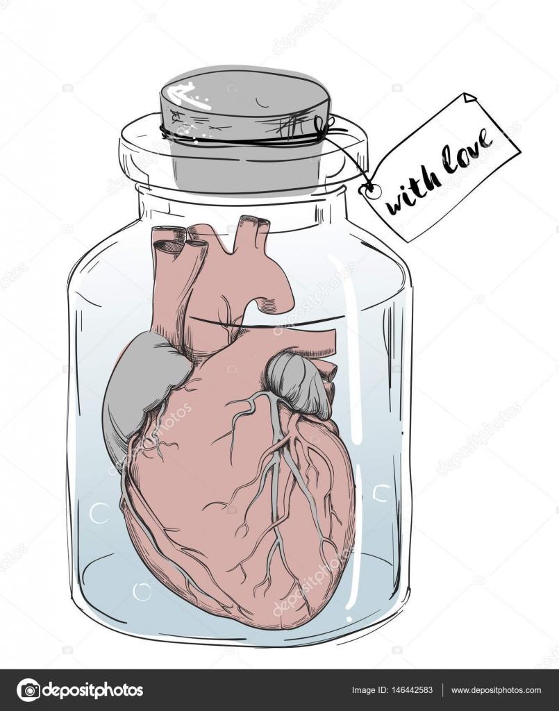 corazón - broma divertida de la anatomía — Vector de stock © Cofeee ...