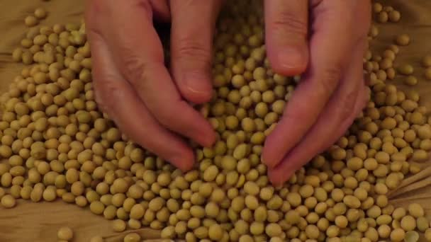 Soybean beans by hand,seeds food raw material