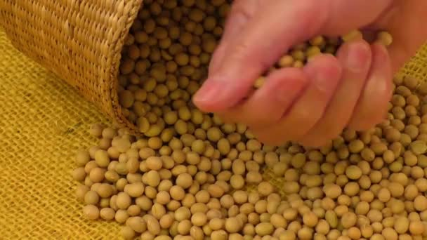 Soybean beans by hand,delicious dishes soya bean