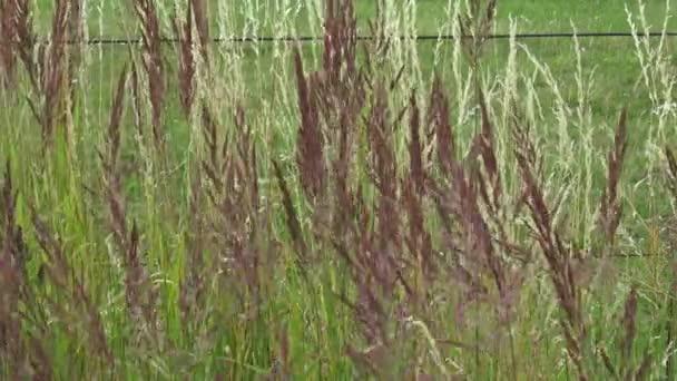 trávy ve větru