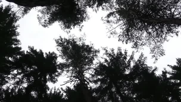 Dark crowns of trees tending upwards, into the sky.