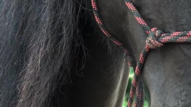 Detail koně, srst a hřívu. Detail hlavy koně s létáním hříva.