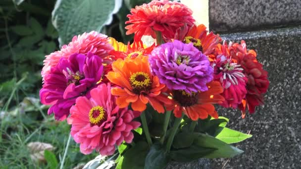 Bright bouquet of multi colored zinnia flowers. A zinnia bouquet of just cut flowers
