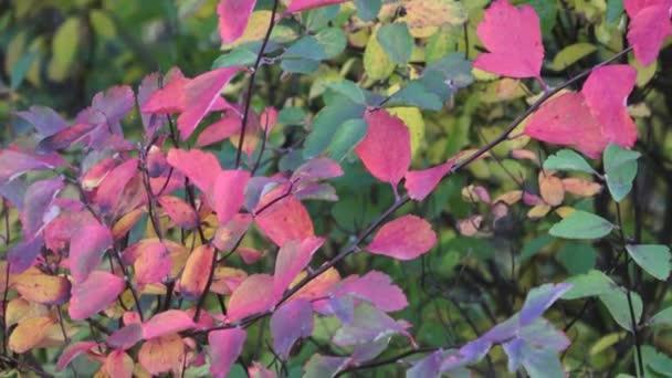 Podzimní listí. Barevné a pozitivní podzim