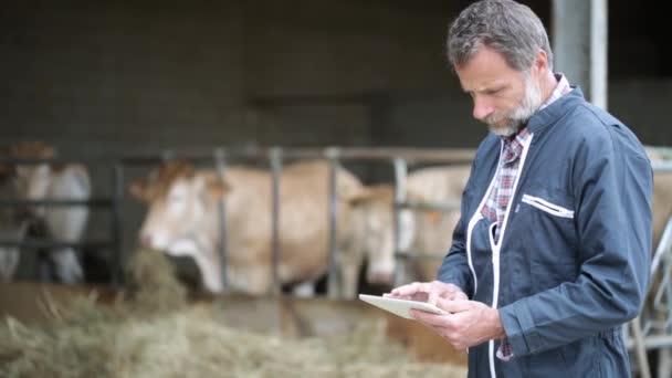vedoucí farmář s jalovic pomocí digitálních tabletu