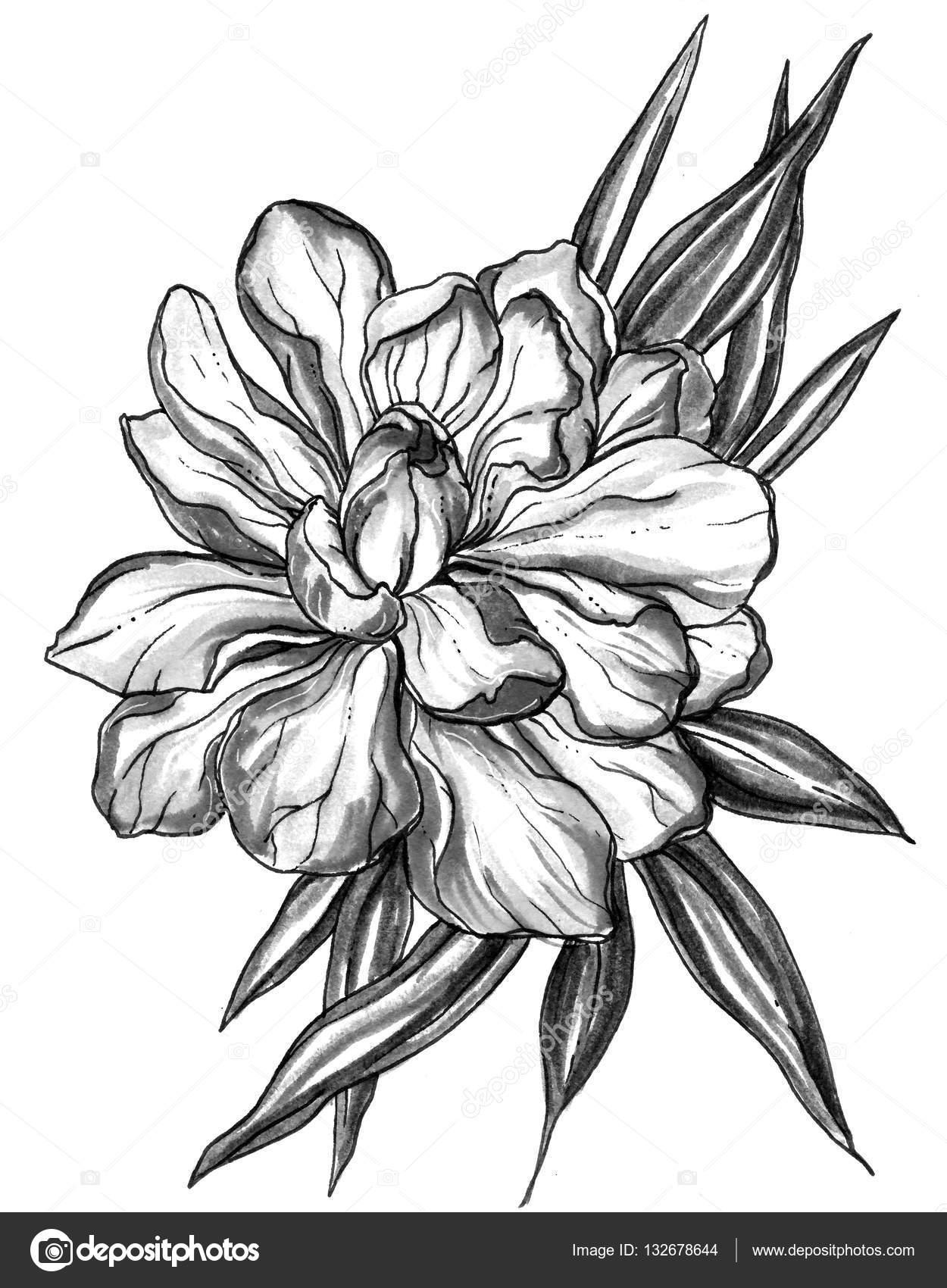 Ginger Tropical Exotic Flower Blossom Stock Photo