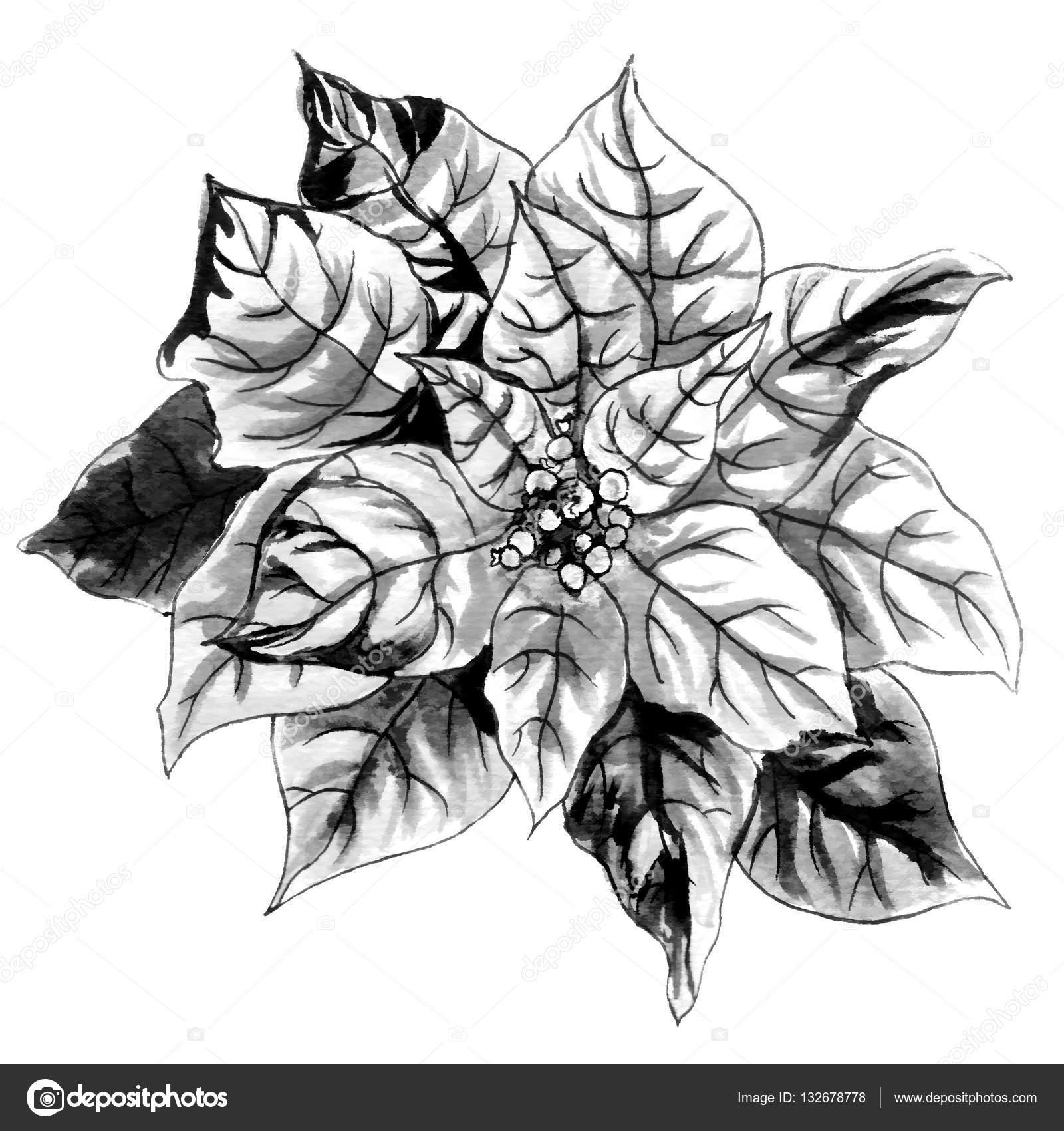 Schwarz / weiß Blume mit Blättern — Stockfoto © magnolija_three ...